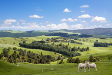 Two Lambs Grazing On The Picturesque Landscape Background
