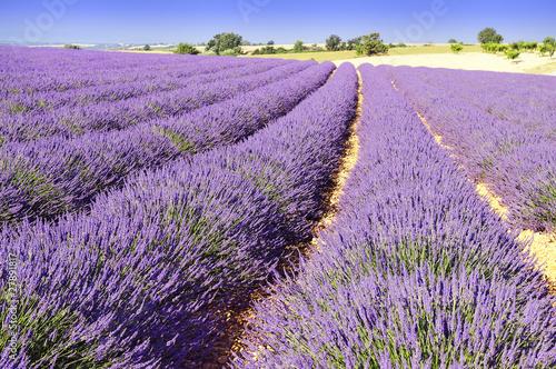 Tuinposter Lavendel lavande de Provence