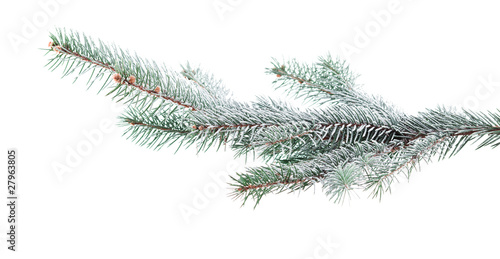 Fotografia Christmas tree branch