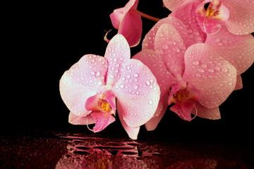 Obraz na SzkleBeautiful pink orchid on black