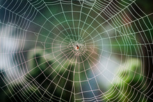Spiral Orb Web With A Spider