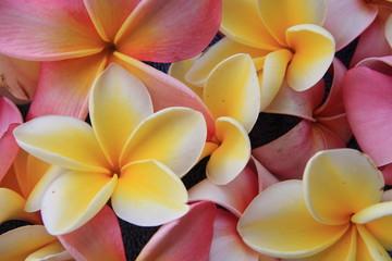 Fototapeta Egzotyczne Blume