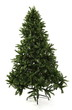 Bare Undecorated Christmas Tree over white