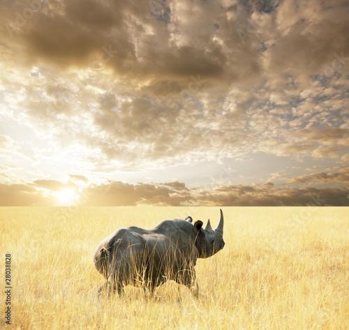 Poster Rhino Rhino