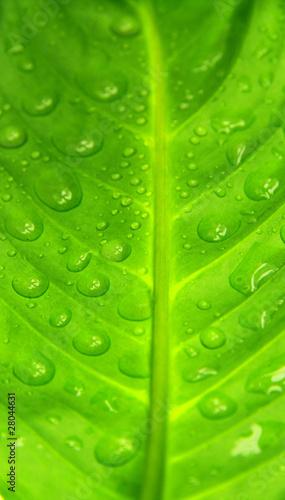zielony-lisc-z-kroplami-wody-zdjecie-makro