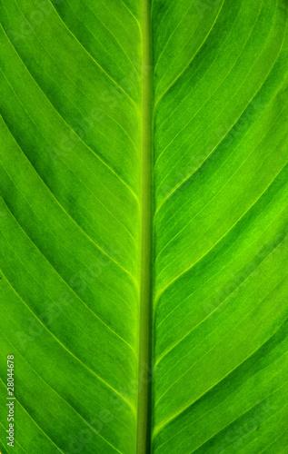 zielony-lisc-szczegolow