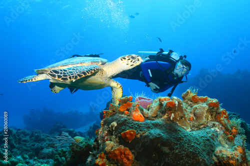 Photo Stands Diving Hawksbill Turtle and Diver