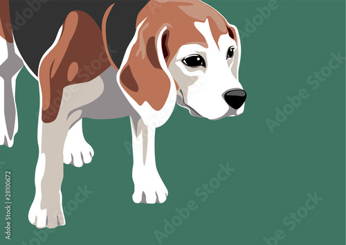 ビーグル犬のイラスト Buy This Stock Vector And Explore Similar