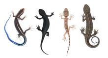 Climb Animal Collection Se