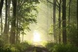 Polną drogą w lesie liściastym w mglisty wiosenny poranek - 28123484