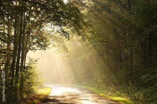 Papiers peints Foret brouillard Rural road through the misty autumn forest at dawn