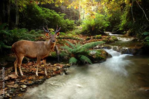 Deurstickers Hert tropical stream and sambar deer