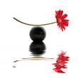 Leinwandbild Motiv Fleur rouge, équilibre zen