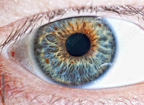 Poster Iris Human eye. macro