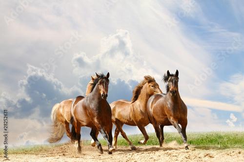 Fototapeta horses run