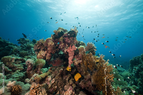 Poster Coral reefs Fish. coral and ocean.