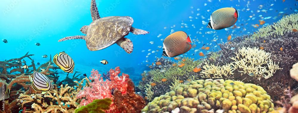 Fototapeta Underwater panorama