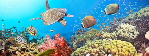 Photo Stands Coral reefs Underwater panorama