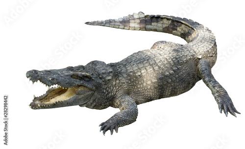 Fotografering crocodile