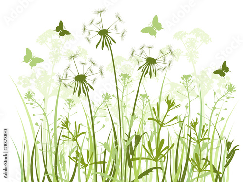 floral background with  grass and dandelions