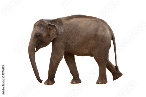 Fotobehang Olifant elephant isolated with hand made clipping path