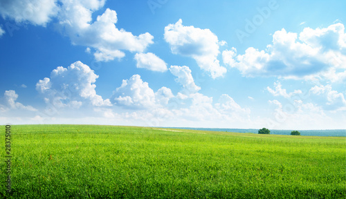 Canvas Prints Pool green field and sunny day