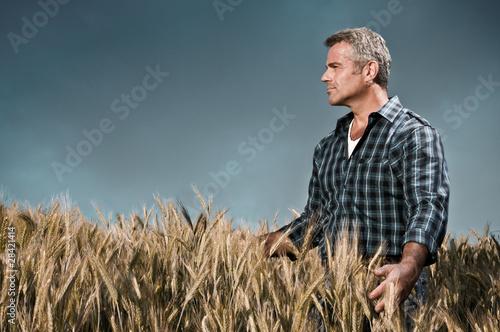Fotografía  Farmer has care of his wheat field
