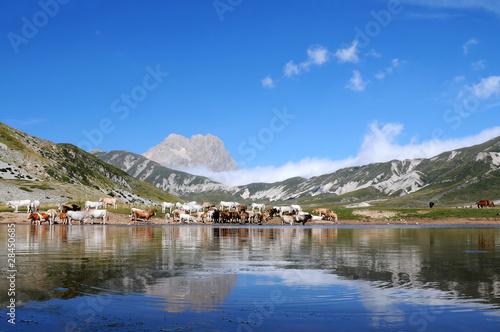 Fototapeta Gran Sasso d'Italia dal lago di Pietranzoli