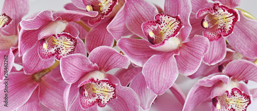 Montage in der Fensternische Orchideen Orchideen, Cymbidium