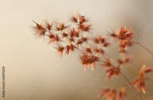 szklo-kwiatowe