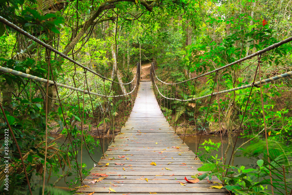 Fototapeta Bridge to the jungle,Khao Yai national park,Thailand