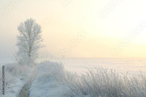 zima-krajobraz-z-drzewem-na-mglowym-ranku