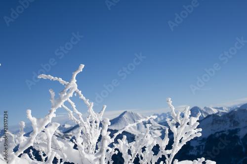 Fototapeta zima mroz-na-galeziach