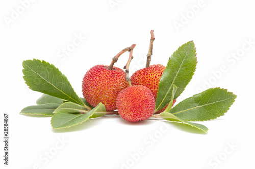 arbutus on white background Wallpaper Mural