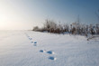 traces snow landscape