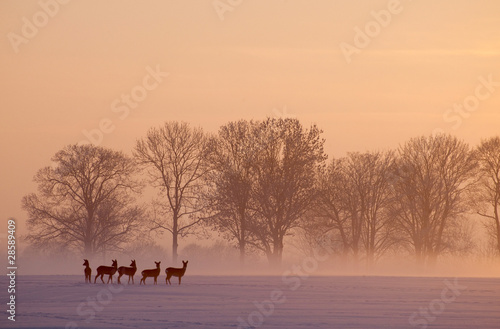 In de dag Ree roe deer wintertime