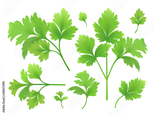 Fotografía  Branches and leaves of parsley