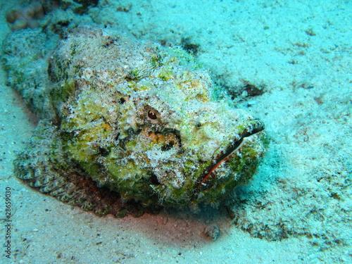 poisson pierre Tableau sur Toile