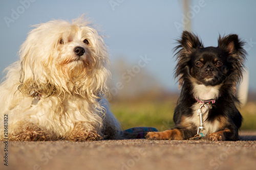 Photo  Strassenhunde