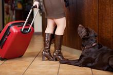 Frau Mit Koffer Und Hund Im Hotel