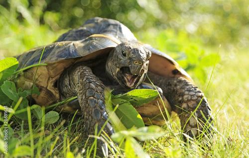 Fotografie, Obraz  Turtle Eating