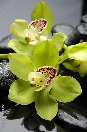 martwa-natura-z-kamykiem-i-orchidei