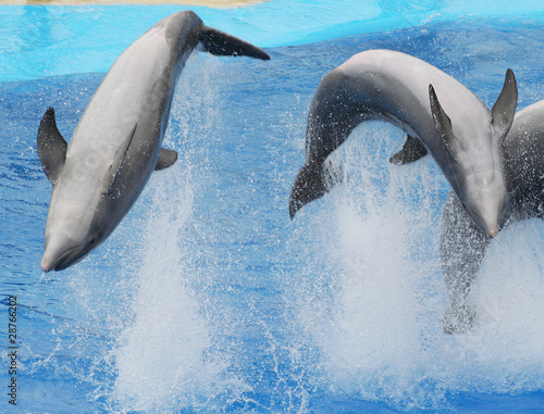Poster Dolfijnen juming dolphins