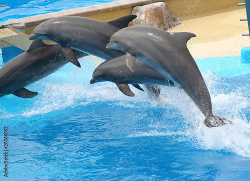 Foto op Plexiglas Dolfijnen juming dolphins