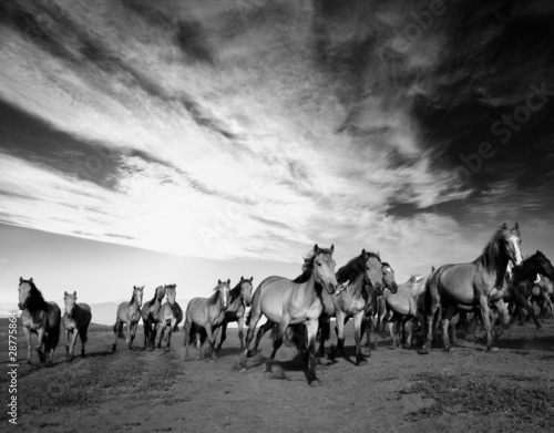 Fotografie, Tablou Wild horses