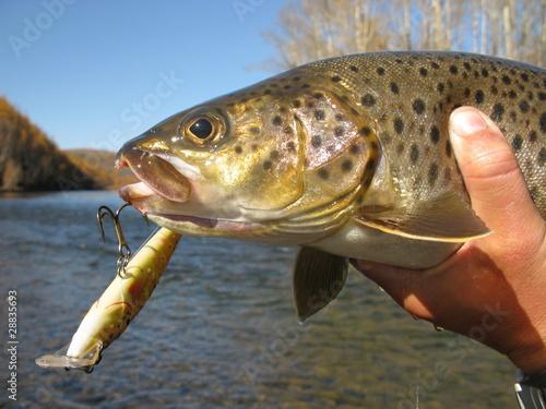 Fotobehang Vissen Fish