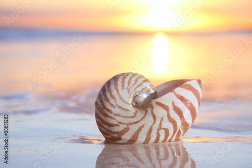 Fotografie, Obraz  nautilus shell in the sea , sunrise