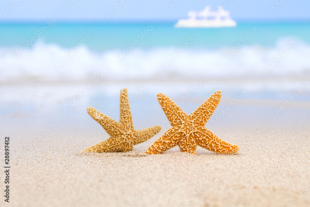 Plissee mit Motiv - two starfish on beach, blue sea and white boat