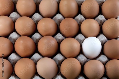 Fotografía  an egg white into brown eggs, Visible minority