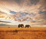 Fototapeta Sawanna - Elephant